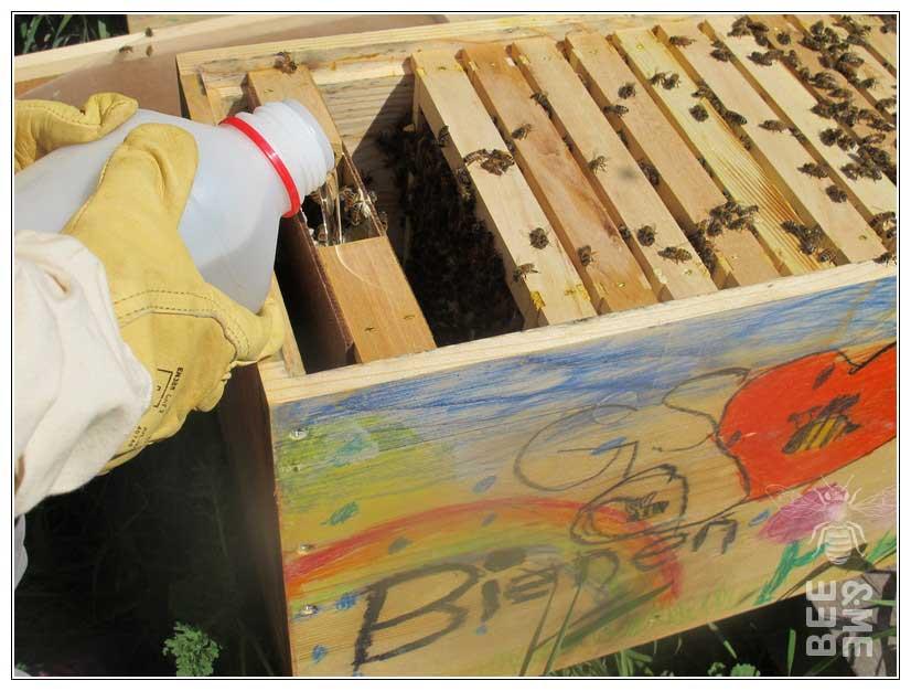 Honigbienen füttern