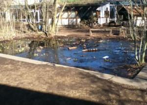 Der Teich mit umgebenden Sträuchern
